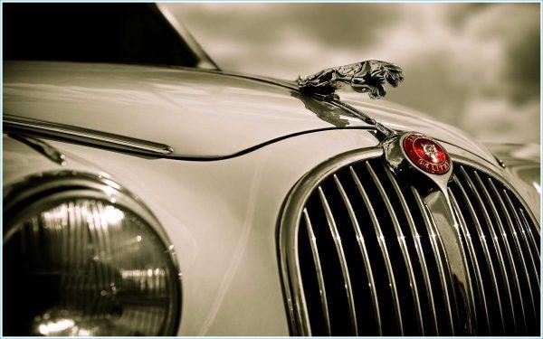 insigne-jaguar